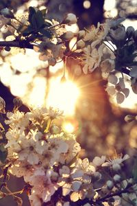 Preview wallpaper branch, flowers, spring