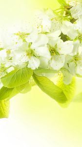 Preview wallpaper branch, flowers, spring, apple