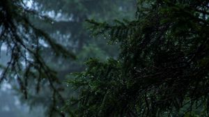 Preview wallpaper branch, fog, drops, rain, dark