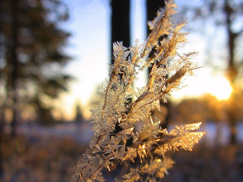 800x600 Wallpaper branch, frost, crystals, ice