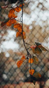 Preview wallpaper branch, leaves, fence, mesh, autumn, macro
