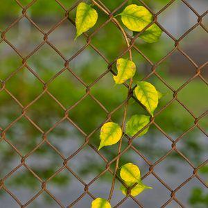 Preview wallpaper branch, leaves, mesh, plant, macro