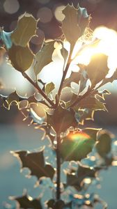 Preview wallpaper branch, light, flare, bright, leaves, blur