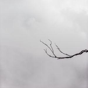 Preview wallpaper branch, minimalism, bw, sky