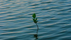 Preview wallpaper branch, water, plant, waves