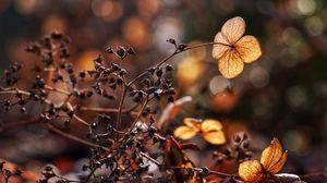 Preview wallpaper branches, herbarium, dry, autumn, macro
