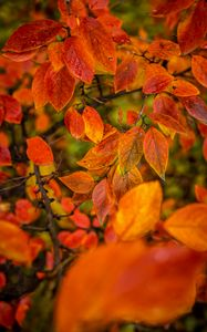 Preview wallpaper branches, leaves, autumn, macro, orange, bright