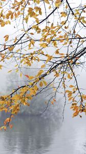 Preview wallpaper branches, leaves, fog, autumn