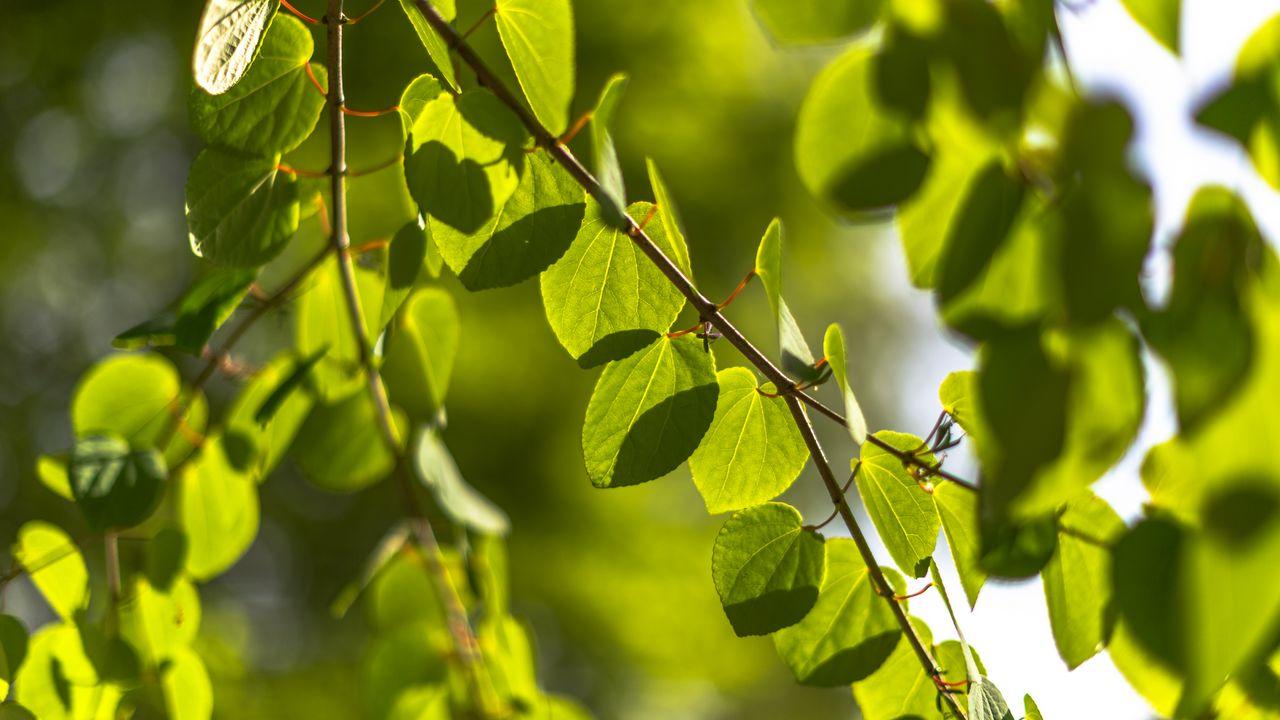 Wallpaperbranches,leaves,green,macro高清壁纸免费下载