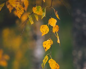 Preview wallpaper branches, leaves, yellow, macro, autumn