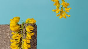 Preview wallpaper brick, flowers, coral, still life, blue, pink