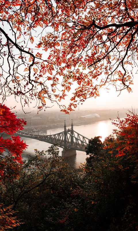 480x800 Wallpaper bridge, autumn, city, citadella, budapest, hungary