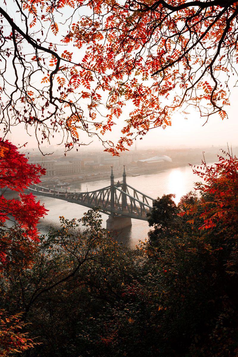 800x1200 Wallpaper bridge, autumn, city, citadella, budapest, hungary