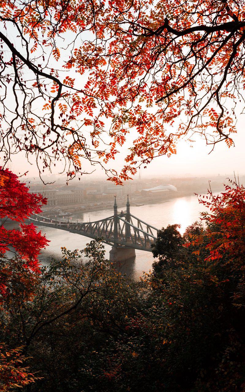 800x1280 Wallpaper bridge, autumn, city, citadella, budapest, hungary