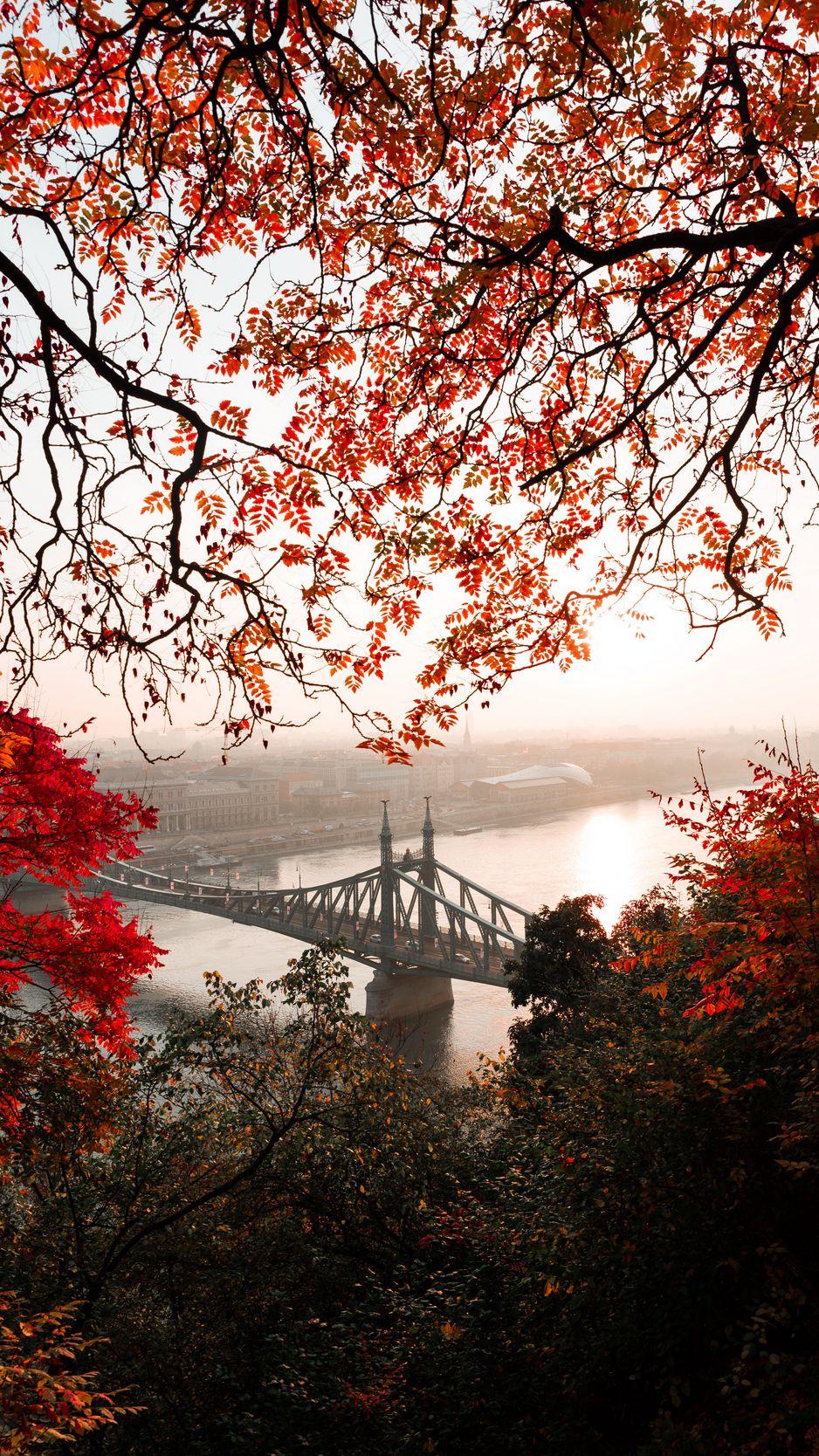 938x1668 Wallpaper bridge, autumn, city, citadella, budapest, hungary