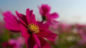 Preview wallpaper bright, petals, pink, sky, flower, field