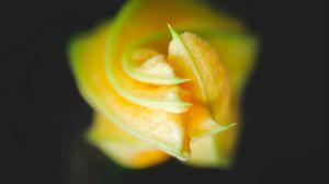 Preview wallpaper bud, flower, macro, yellow, petals