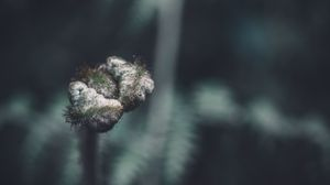 Preview wallpaper bud, macro, branch, plant, closeup