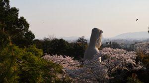 Preview wallpaper buddha, idol, statue, god, trees