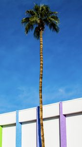 Preview wallpaper building, colorful, palm tree, minimalism