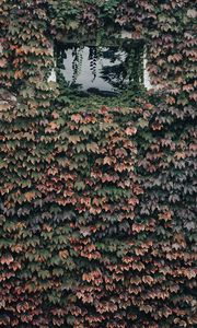 Preview wallpaper building, window, plant, leaves, ivy