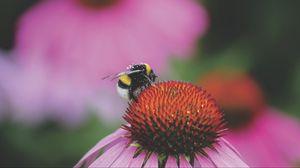 Preview wallpaper bumblebee, flower, bud, pollen