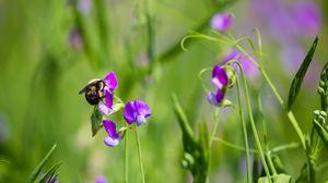 Preview wallpaper bumblebee, flowers, plants, macro