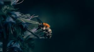 Preview wallpaper bumblebee, insect, flower, close-up