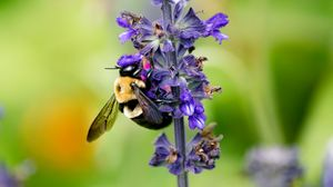 Preview wallpaper bumblebee, insect, flower, plant, macro