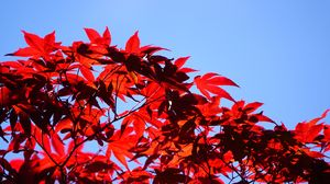 Preview wallpaper bush, branches, leaves, red, macro