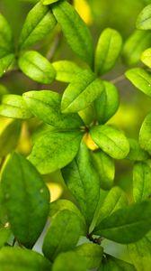 Preview wallpaper bush, branches, leaves, macro, green