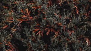Preview wallpaper bush, foliage, tree, plant, leaves