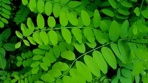 Preview wallpaper bush, leaves, branches, macro, green