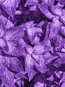 Preview wallpaper bush, leaves, macro, purple