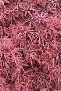 Preview wallpaper bush, leaves, pink, macro