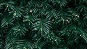 Preview wallpaper bush, leaves, plant, green