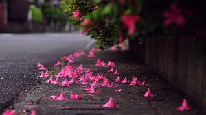 Preview wallpaper bush, petals, asphalt, macro