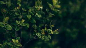 Preview wallpaper bush, plant, branches, leaves, green