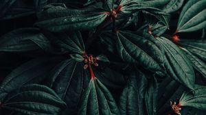 Preview wallpaper bush, plant, leaves, macro, green