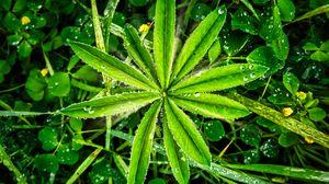 Preview wallpaper plants, leaves, drops, macro