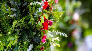 Preview wallpaper bush, roses, flowers, leaves, macro