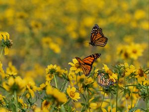 Preview wallpaper butterflies, insects, flowers, yellow, macro