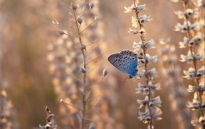 Preview wallpaper butterfly, blue, insect, flowers, summer