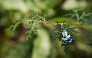 Preview wallpaper butterfly, blue, insect, plant, macro