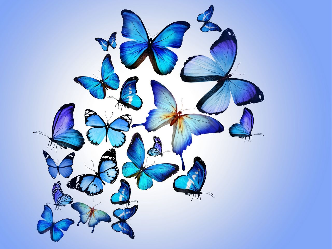1280x960 Wallpaper butterfly, colorful, blue, drawing, art, beautiful