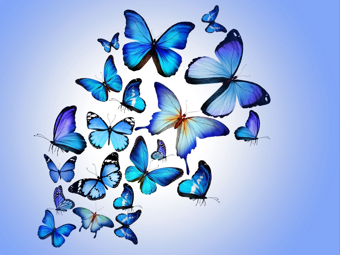 1400x1050 Wallpaper butterfly, colorful, blue, drawing, art, beautiful