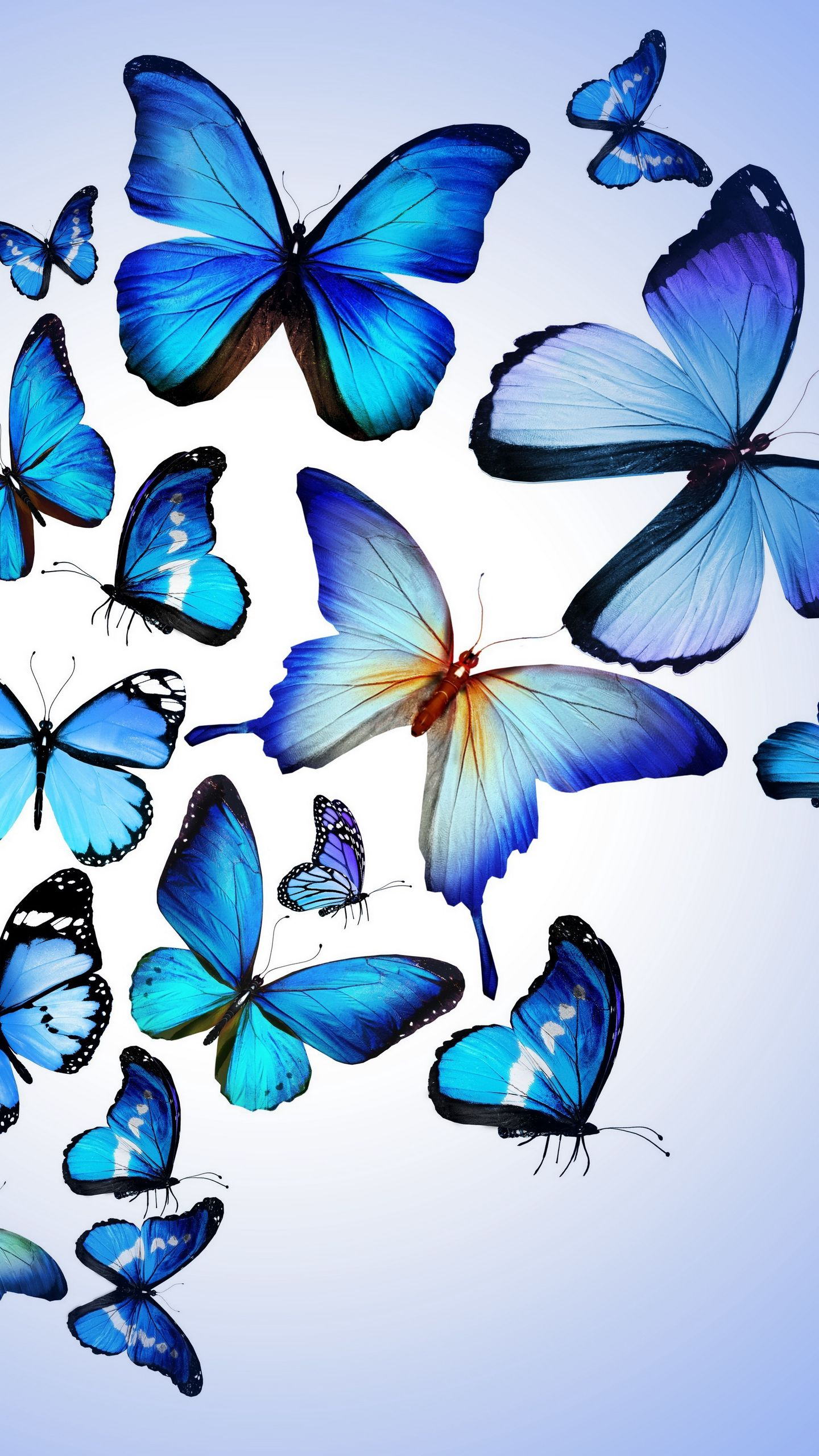 1440x2560 Wallpaper butterfly, colorful, blue, drawing, art, beautiful