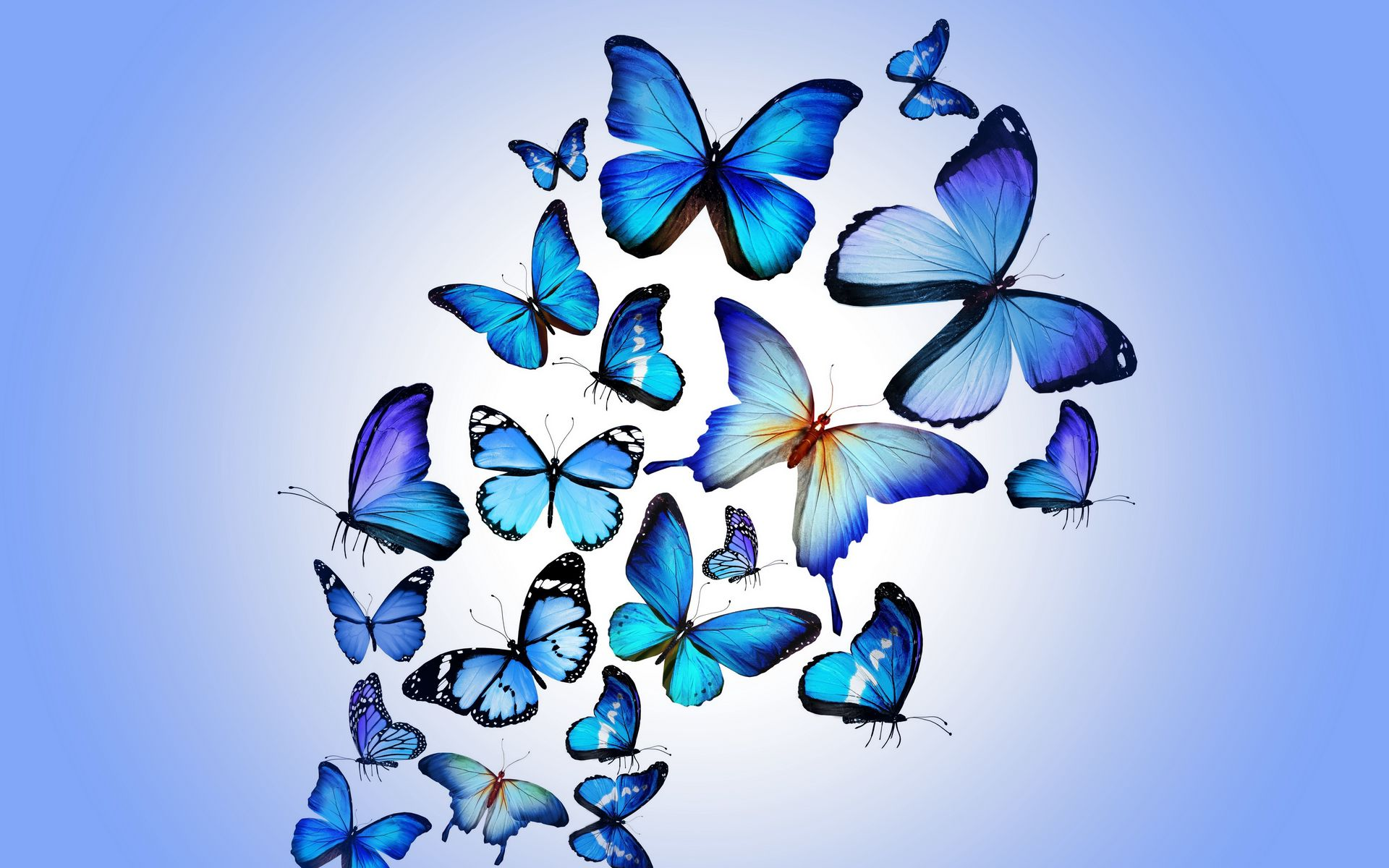 1920x1200 Wallpaper butterfly, colorful, blue, drawing, art, beautiful