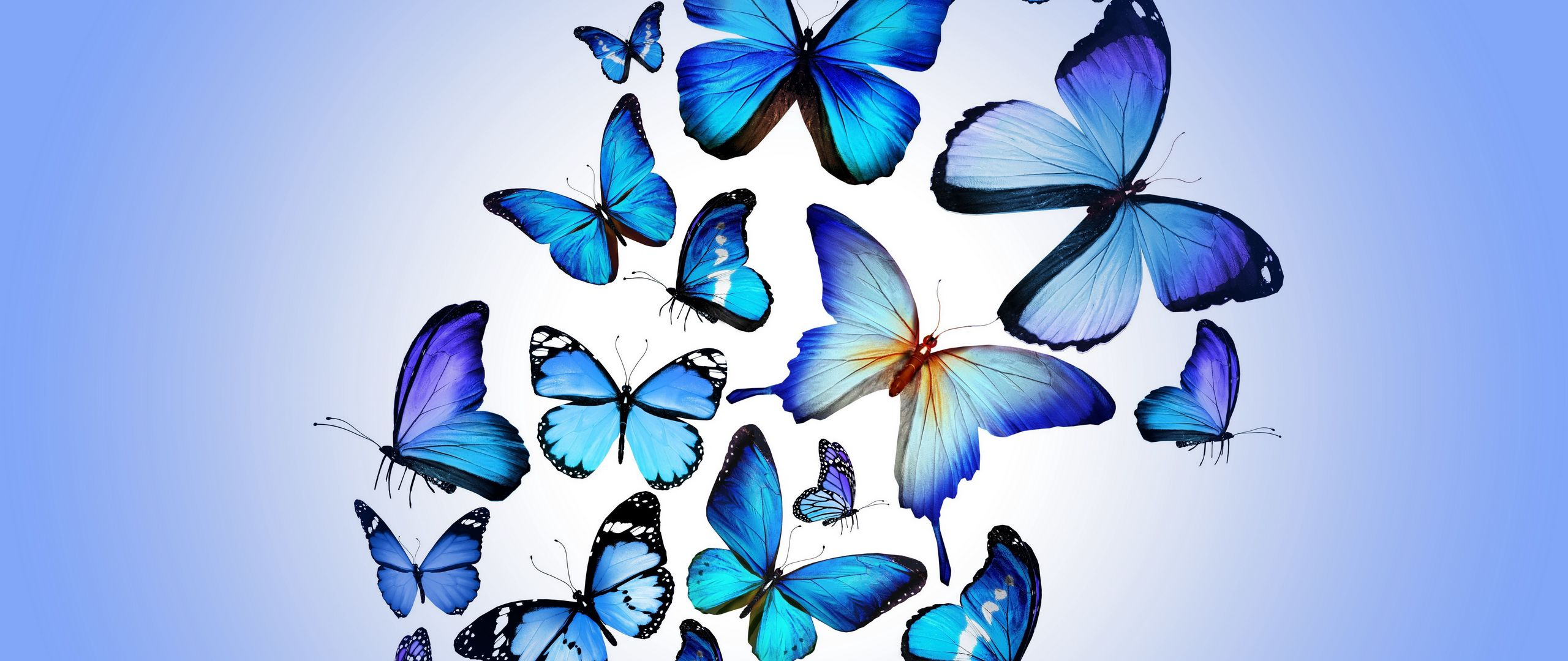 2560x1080 Wallpaper butterfly, colorful, blue, drawing, art, beautiful