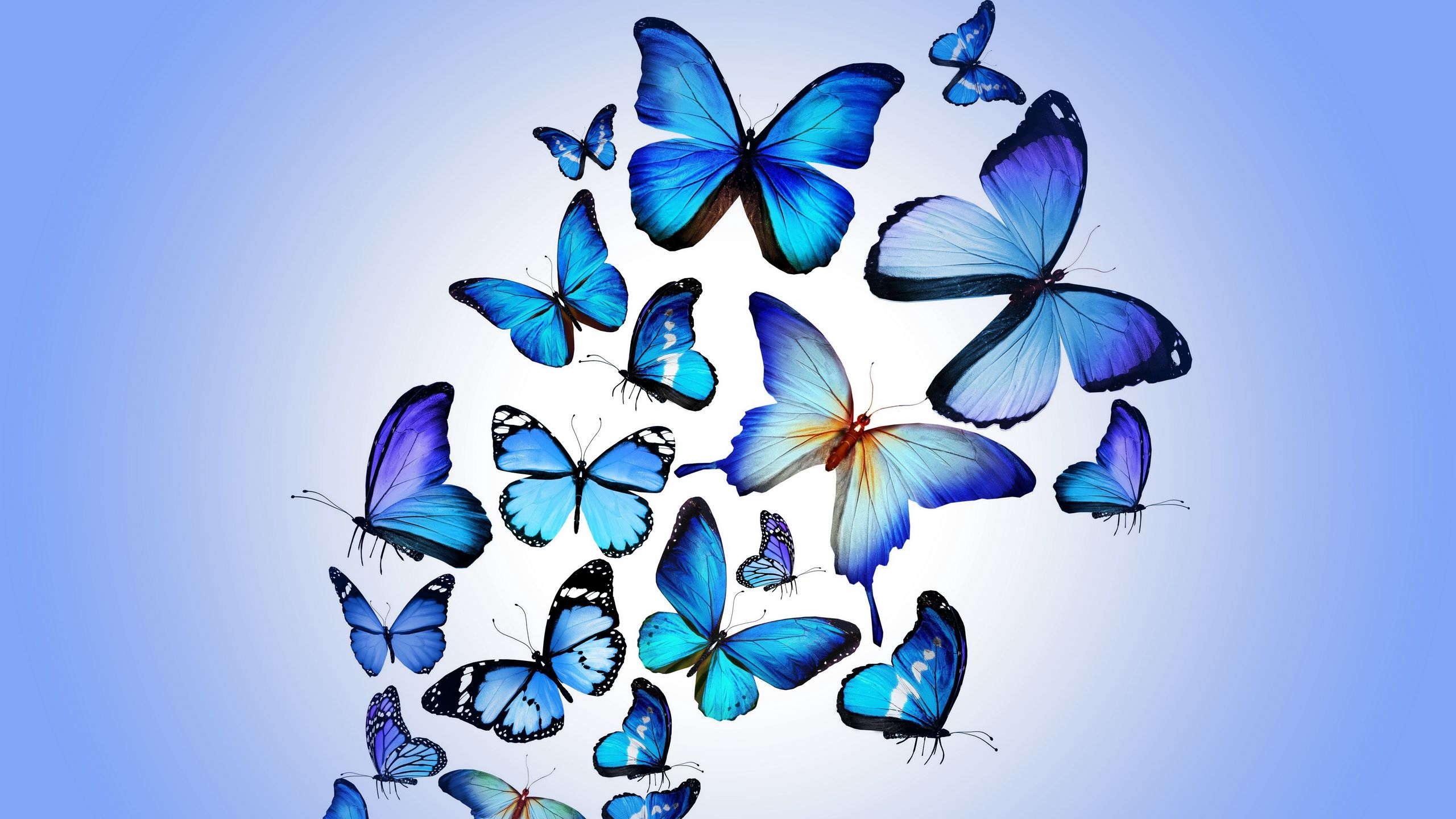 2560x1440 Wallpaper butterfly, colorful, blue, drawing, art, beautiful